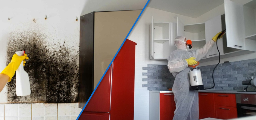 плесень на стенах на кухне