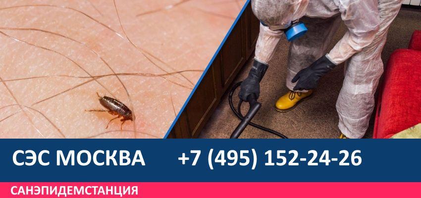 Уничтожение блох в квартирах и частных домах, дезинфекция и обработка помещений