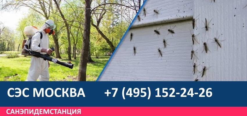 обработка от комаров на участке