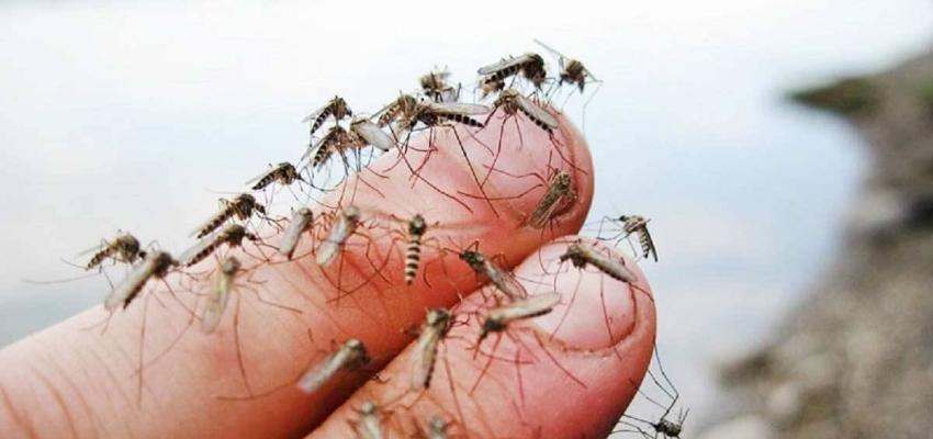 уничтожение комаров