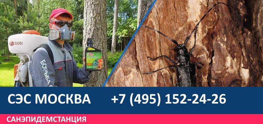 Обработка деревьев от короеда
