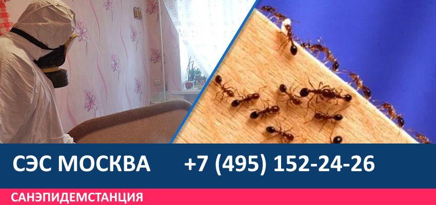 обработка участка от муравьев