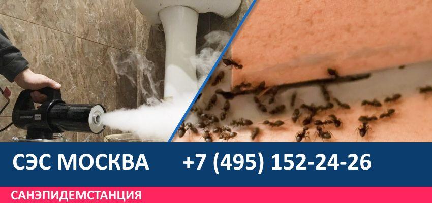 Уничтожение муравьев на участке
