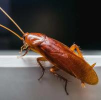 Уничтожение и обработка от тараканов в Москве