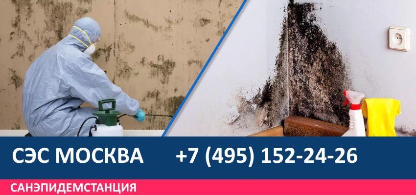 Дезинфекция Площадь Гагарина